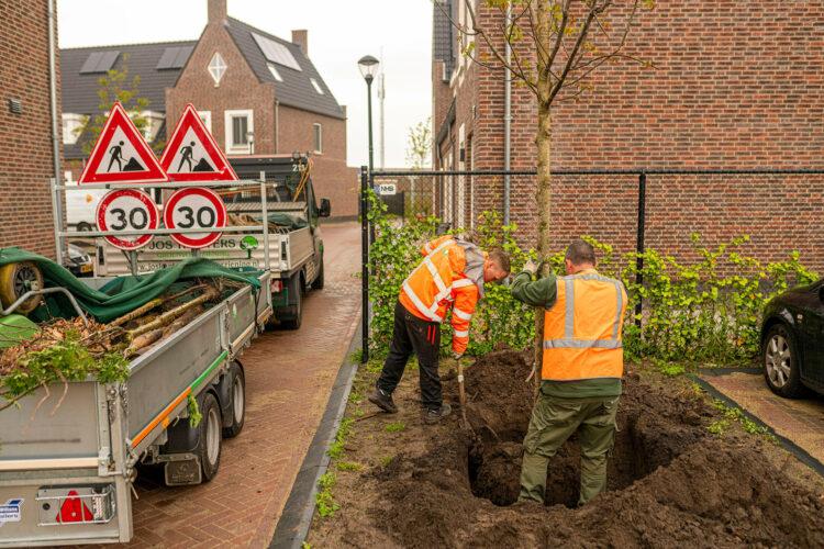veilig boom planten