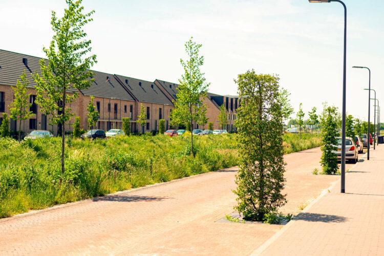 groenaanleg nieuwbouwwijk